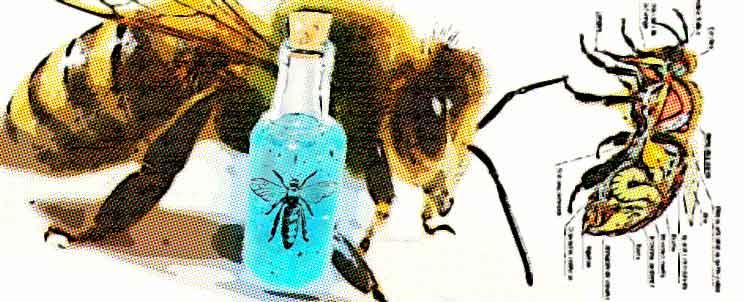 apis y homeopatía: propiedades curativas del veneno de abeja