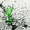 clasificación de las plantas del desierto