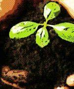 clasificación de plantas terrestres