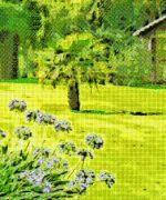 tipos de césped para jardín