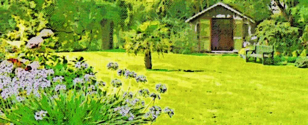 Tipos de c sped para jard n cu l escoger - Tipos de jardineras ...