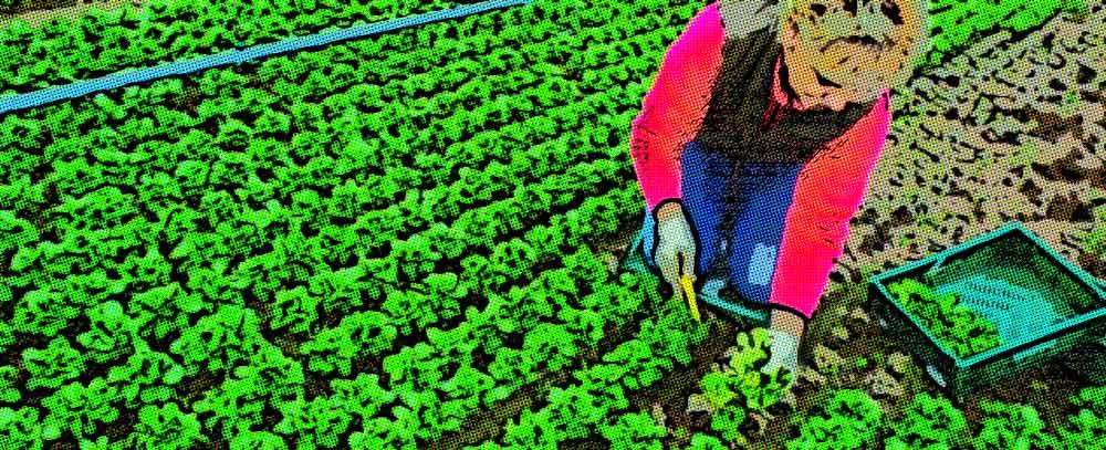 tipos y precios de insumos agricolas