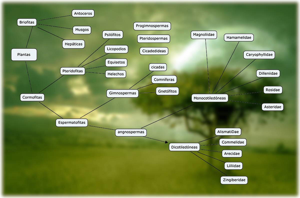 de las plantas terrestres  Clasificación de las plantas