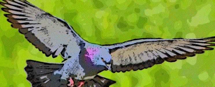 Cómo realizar un espanta palomas casero