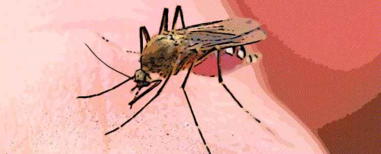Picaduras de insectos: ¿Qué hacer?