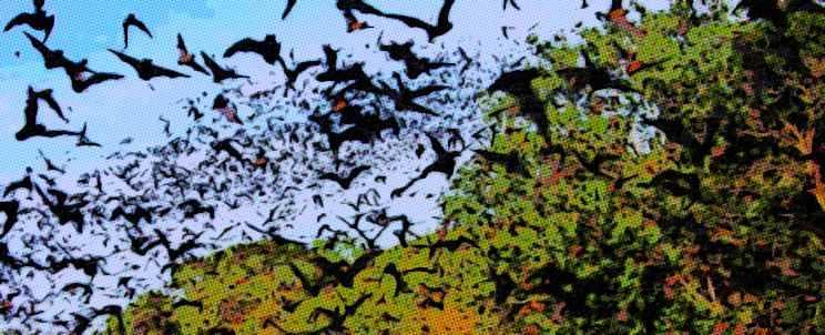 Ahuyentar a los murciélagos con naftalina