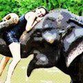 Cinco destinos donde contratar un paseo en elefante