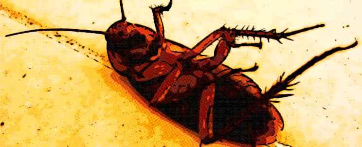 Control de cucarachas con ácido bórico