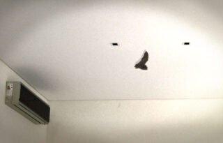 murciélago volando en el living
