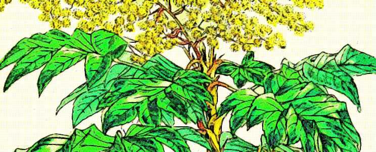 Tipos de plantas según tamaño, longevidad, constitución y flores