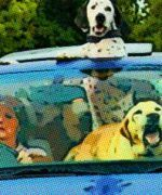 ¿Cómo viajar con mascotas en auto?