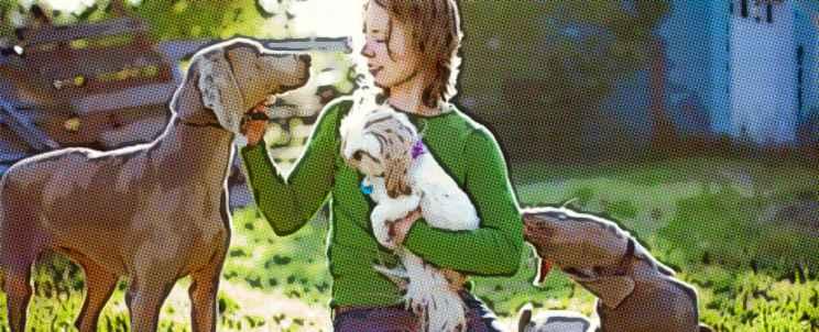 ¿cómo elegir un buen criador de perros?