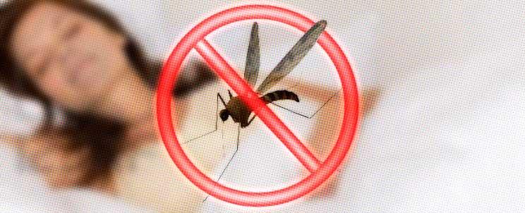 trampa para mosquitos casera organica