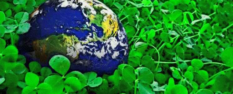voluntariado medioambientalista en verano