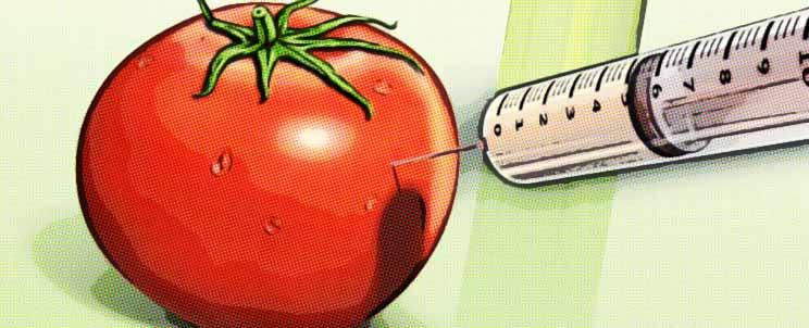 Consecuencias de los alimentos transg nicos for Que son cultivos asociados
