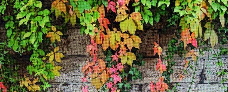 plantas trepadoras o enredaderas para decorar interiores o