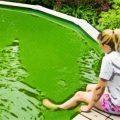 ¿Cómo eliminar algas y verdor en las paredes de mi piscina?