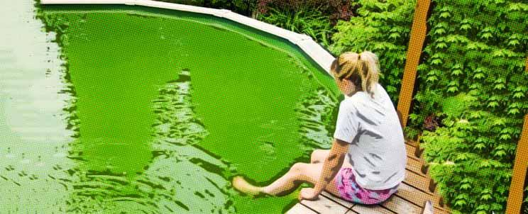 Descubra c mo eliminar algas y verdor en las paredes de mi for Algas en piscinas de plastico