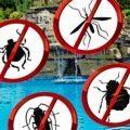¿cómo eliminar plagas de insectos vivos del agua de mi piscina?
