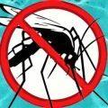 ¿Cómo evitar y eliminar larvas de mosquito en mi piscina?