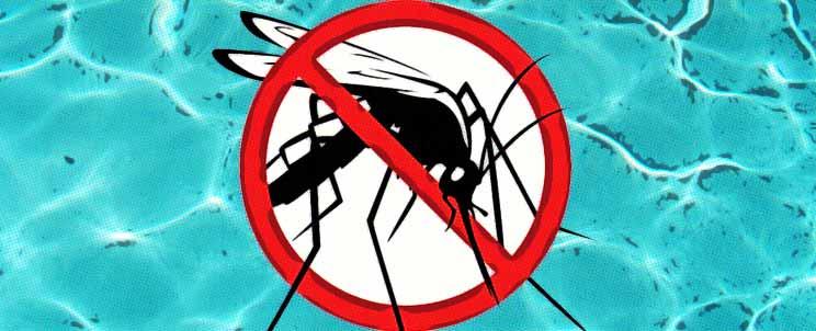 C mo evitar y eliminar larvas de mosquito en mi piscina - Como eliminar a los mosquitos de mi cuarto ...
