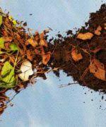 ¿Cómo reciclar la basura para convertirla en compost?