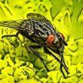 Árboles y plantas aromáticas que espantan insectos