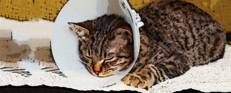 Incomodidad y depresión con el collar isabelino