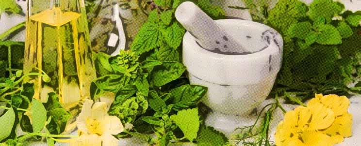 Las 20 mejores plantas medicinales
