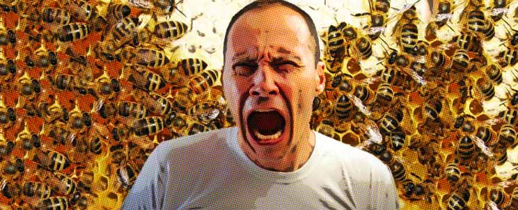 diez insectos con la picadura más dolorosa del mundo