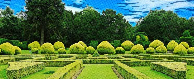 Descubra 5 setos de crecimiento r pido - Setos de jardin ...