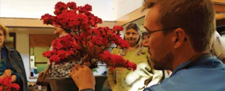 El bonsái y sus cuidados básicos generales