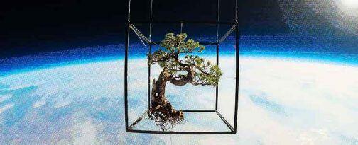 azuma makoto, experto japones en plantas, lanza un bonsai al espacio