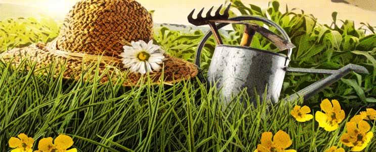 El mundo de los espacios verdes o exteriores for Arreglar el jardin