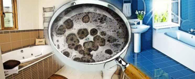 Humedad en el bano hongos