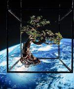 plantas en el espacio