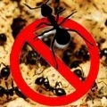repeler hormigas