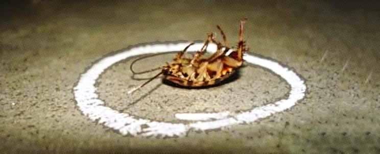 Eliminar las cucarachas