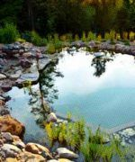 piscinas ecológicas