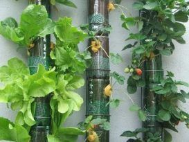 Cultivos aeropónicos botellas
