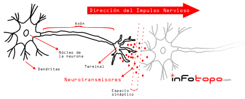 Esquema de la neurotransmisión o sinapsis