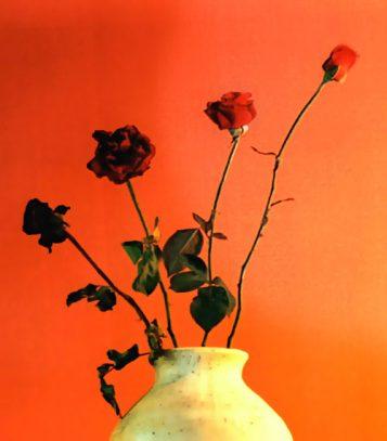 crecimiento rapido de flores
